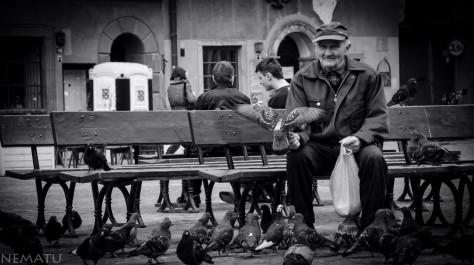 Viejo dando de comer a las palomas.