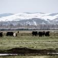 Mongolia-103