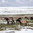 Mongolia-124