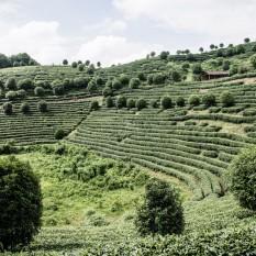 Terrazas de té en Yangshuo.