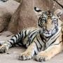 TigerTemple-13