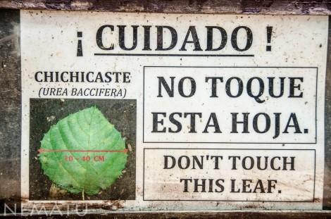 Honduras-2 LOW
